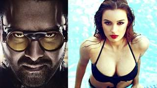 Did Evelyn Sharma teach superstar Prabhas her sultry looks in Saaho?
