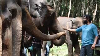 """The elephant will never give a wrong reaction"": Rana Daggubati on building a bond with Elephants"