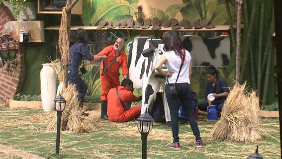 Bigg Boss 9 Nau: Day 44- Contestants performing the Dairy Task