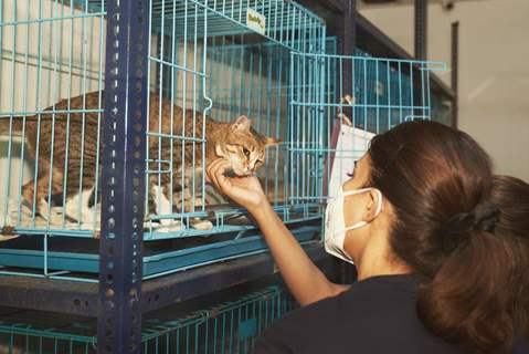 Jacqueline Fernandez visits and helps stray animals