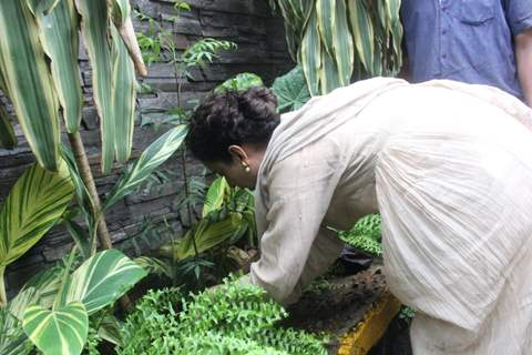 Kangana Ranaut snapped planting trees outside her office!