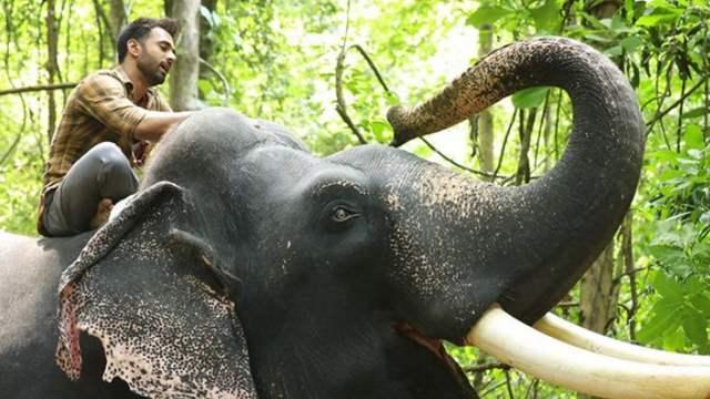 Pulkit Samrat and Unni the elephant from Haathi Mere Saathi defines Friendship Goals