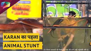 Karan Patel का पहला Animal Stunt | Khatron Ke Khiladi Updates